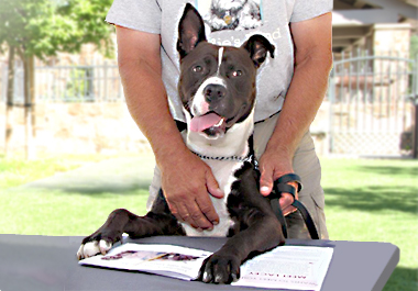 Dog and adopter filling out paperwork