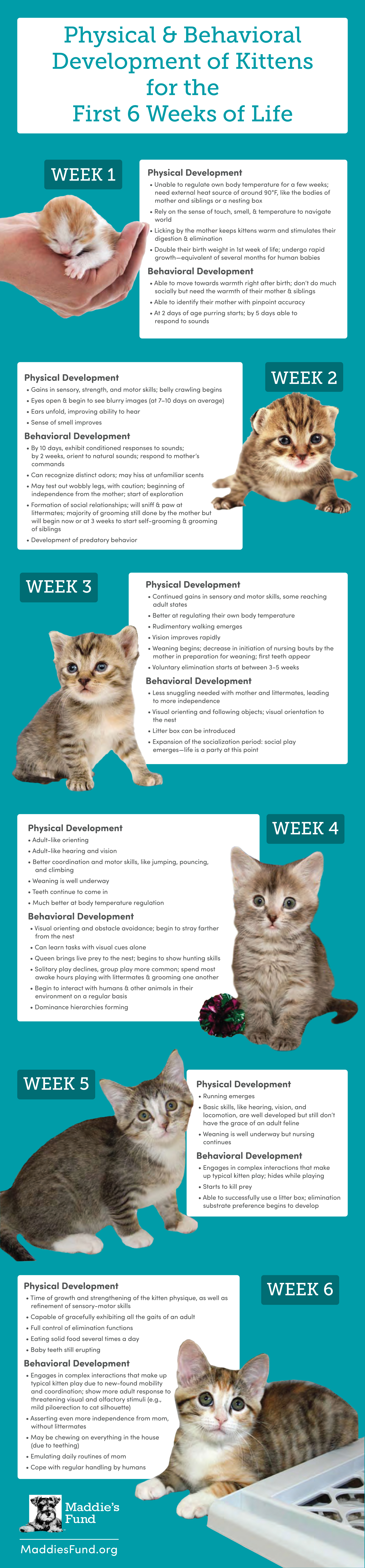 Physical And Behavioral Development Of Kittens For The First Six