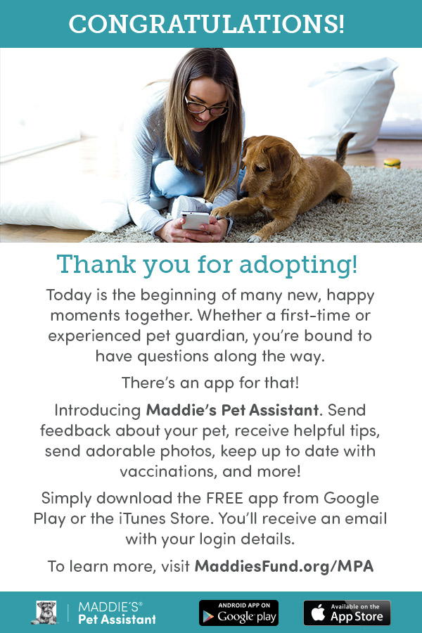 Pet Assistant Foster Email