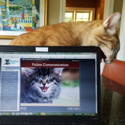 Feline Communications Course