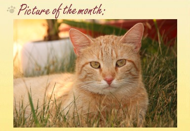 Cat of the month