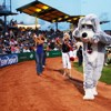 Ballpark Dogs (and Cats!)