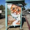 Catch a Bus, Catch a New Shelter Pet Project Ad!