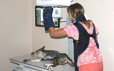Dog getting an x-ray