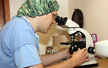 Veterinarian looking in a microscope