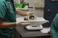 Weighing a Kitten