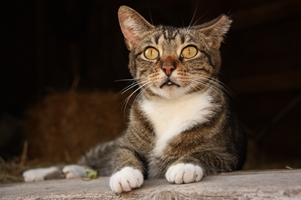 How To Work With Municipalities To Save Community Cats