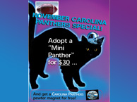 adopt a Mini Panther Special